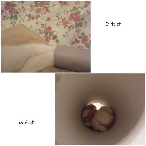 cats_20141117202022160.jpg