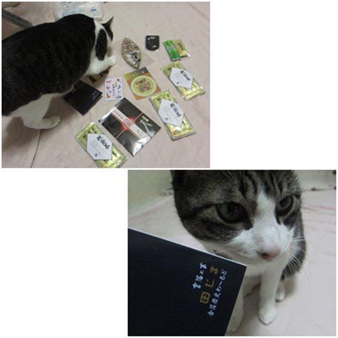 cats_20141206003519203.jpg