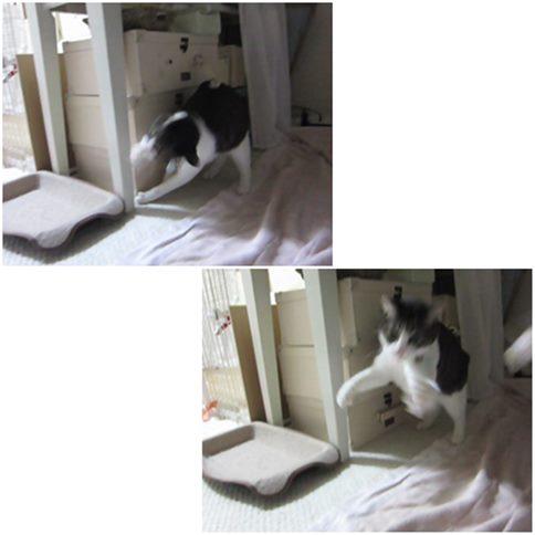 cats_2014120622464308a.jpg