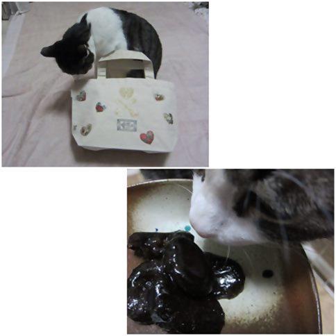 cats_201412082019027c6.jpg
