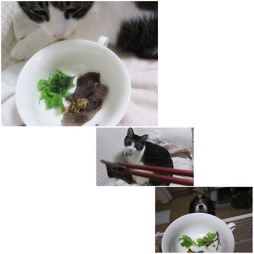 catssika.jpg