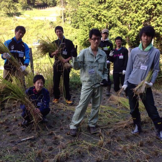 東海2013 稲刈り完了