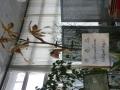 洋らんセンター展示1