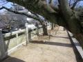 耕三寺の木
