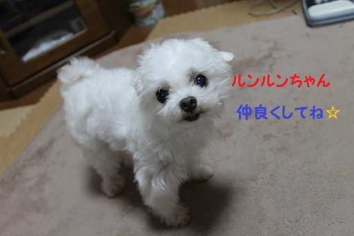 IMG_5308.jpg