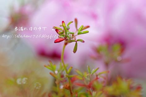 オキザリスの葉っぱ
