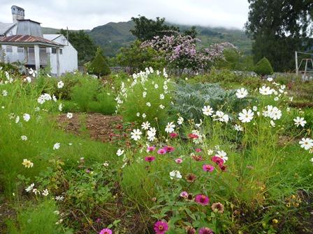 9 きれいな庭