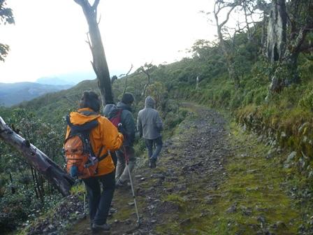 22苔むしている登山道