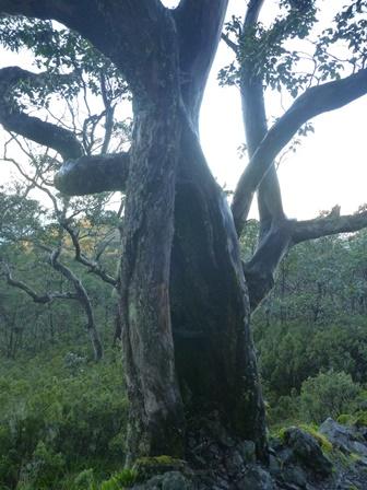 24大きな木