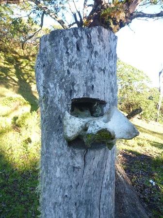 26木に埋め込まれた骨