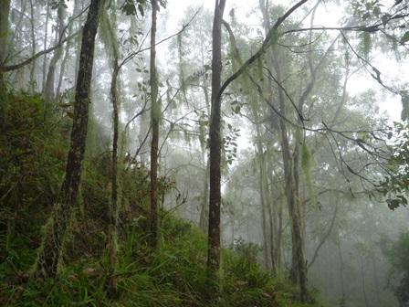 29サルオガセのまきついた木木木