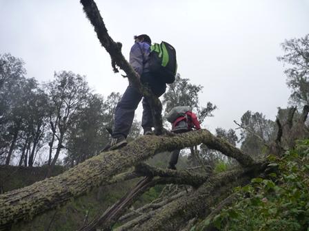 17 登山道に倒木が覆いかぶさっている