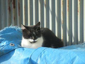 猫ひなたぼっこ_R