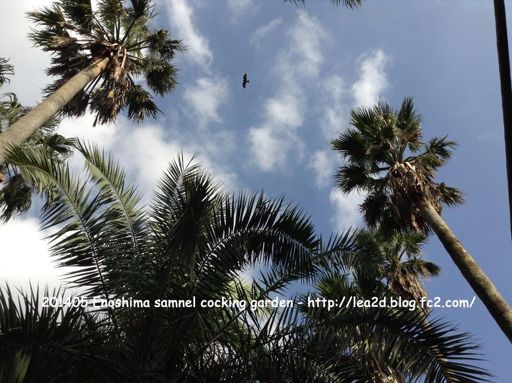 2014年10月 江の島サムエル・コッキング苑 - Enoshima samnel cocking garden
