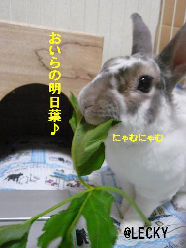 s1340324.jpg
