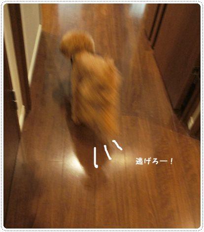 20130906_5.jpg