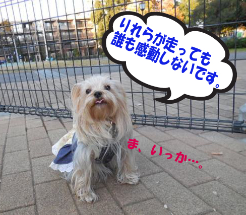 11_20131206051044735.jpg