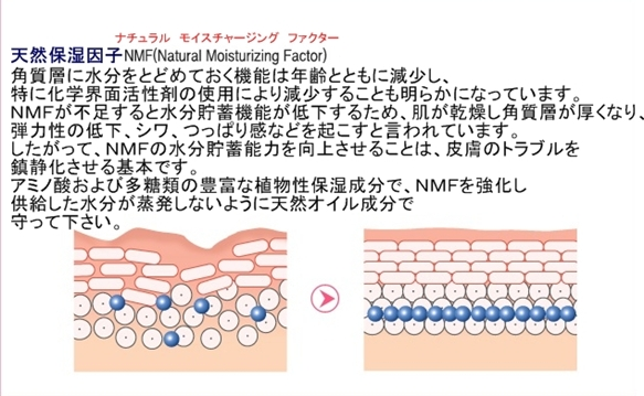 【アイソイ】ハイドロモイスチャーエッセンス NMF因子説明翻訳文-horz