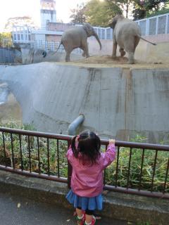 グズリながらアジア象