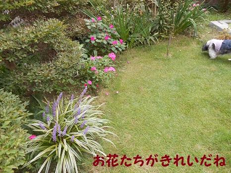 DSCN6082.jp<br />g