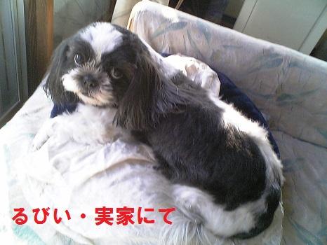 Image308.jpg