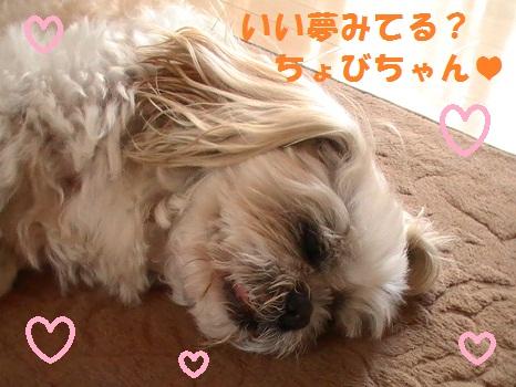 PIC_0411.jpg