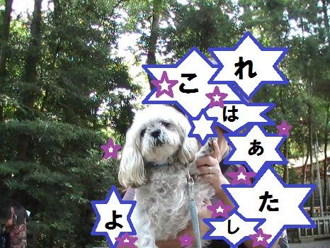 PIC_0592.jpg