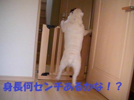 PIC_1318.jpg