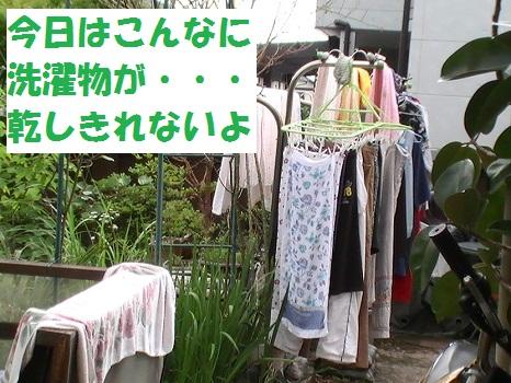 PIC_1409.jpg