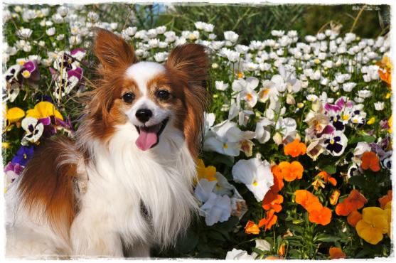 お花とばけちん