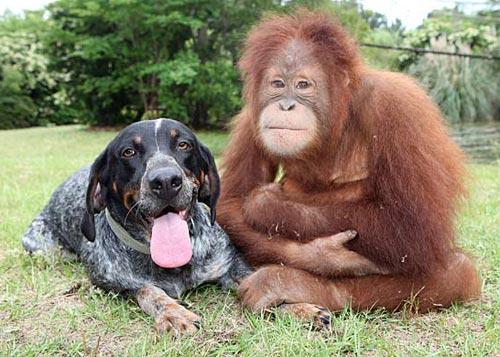 monkey-dog-6.jpg