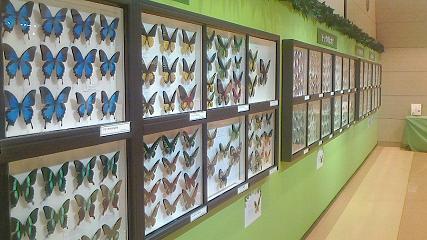昆虫展-3