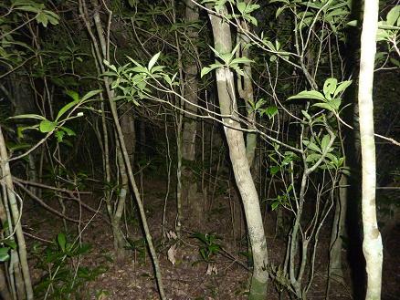 マルバネの森