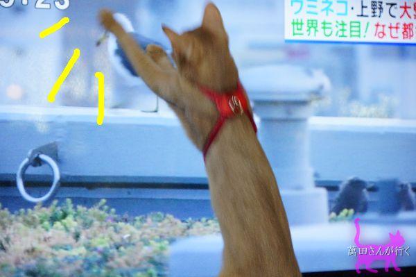 うみねこ(2)
