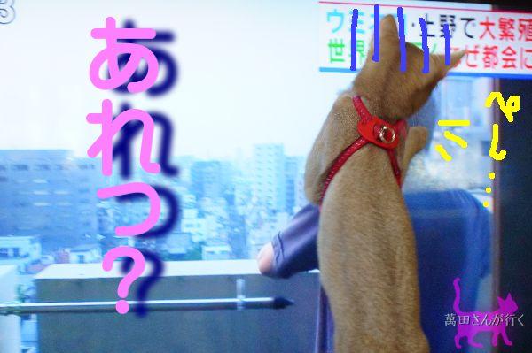 うみねこ(6)