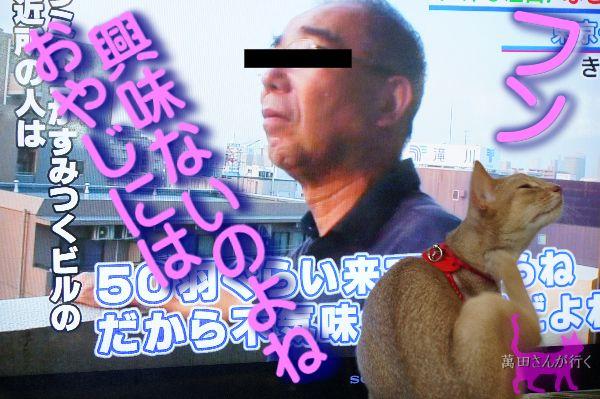 うみねこ(7)