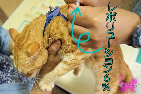 #27りん抜ピンせんワクチン(3)