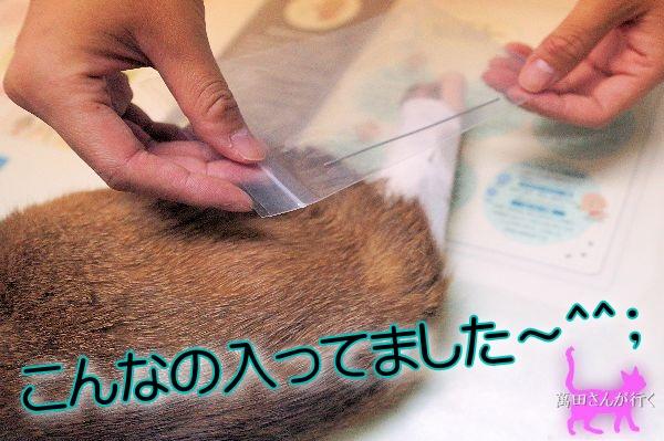 #27りん抜ピンせんワクチン(12)