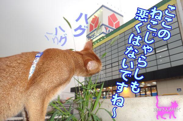 #49ねこじゃらし(2)