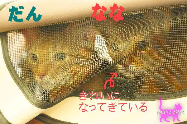 #50しっぽ骨折(1)