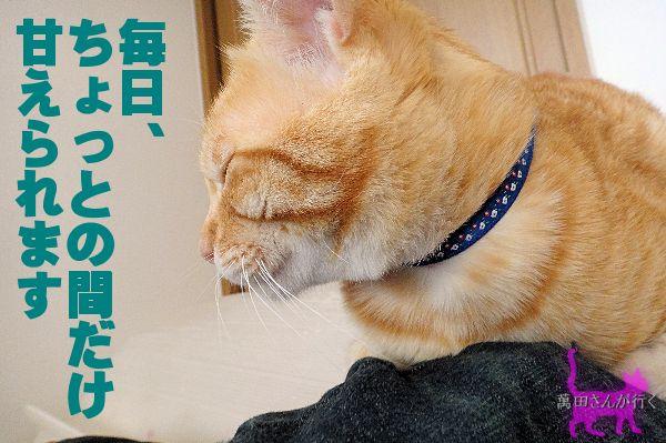 #52せんの謎(3)