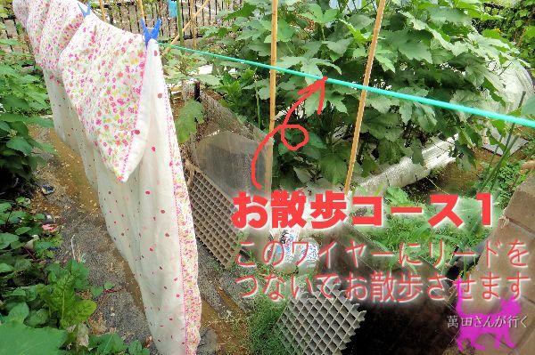 #52せんの謎(10)