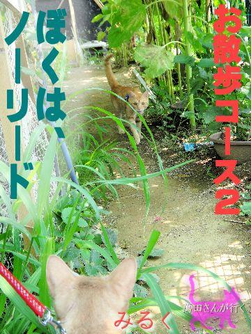 #52せんの謎(11)