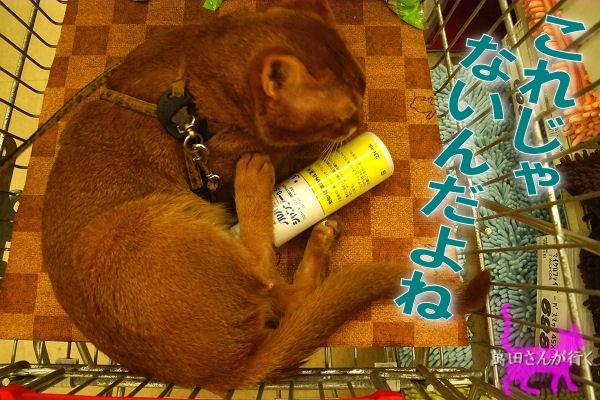 #60りんシャンプーを買いに行く(3)