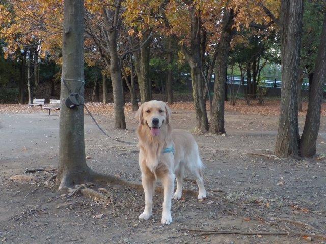 2013-11-28公園 006
