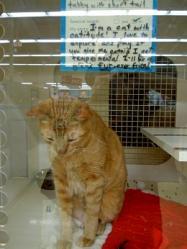 Cats_Petco1.jpg