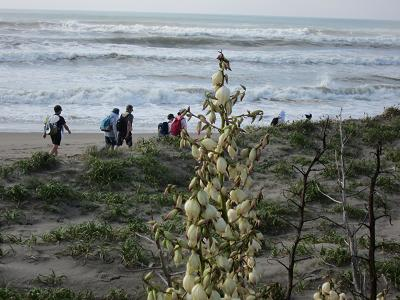 IMG_0954 ⑩ 白波の九十九里浜歩き