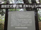 IMG_1052 ④ 赤堀の藩菖蒲園