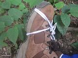 IMG_1514 ④ 靴の応急処置