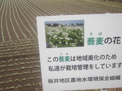 IMG_1549 ⑩ ソバ畑の芽生え